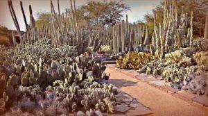 cactus2 signed